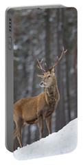 Monarch Of The Woods Portable Battery Charger