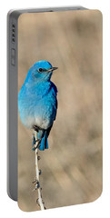 Mountain Bluebird On A Stem. Portable Battery Charger