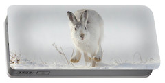 Mountain Hare Approaching Portable Battery Charger