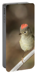 Portable Battery Charger featuring the photograph Mr Kinglet  by Mircea Costina Photography