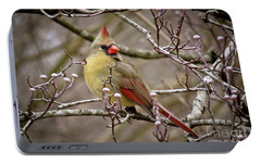Portable Battery Charger featuring the photograph Mrs Cardinal II by Douglas Stucky