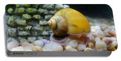 Portable Battery Charger featuring the photograph Mystery Snail by Robert Knight