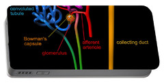 Portable Battery Charger featuring the digital art Nephron Black With Coloured Labels by Russell Kightley