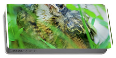 Portable Battery Charger featuring the photograph Nestling, Juvenile Male American Robin by A Gurmankin