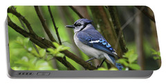 Northern Blue Jay Portable Battery Charger