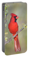 Northern Cardinal Cfh175894 Portable Battery Charger