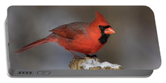 Portable Battery Charger featuring the photograph Northern Cardinal In Winter by Mircea Costina Photography