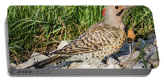 Northern Flicker In The Backyard Portable Battery Charger