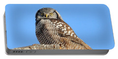 Northern Hawk-owl On Limb Portable Battery Charger