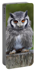 Northern White Faced Owl Portable Battery Charger