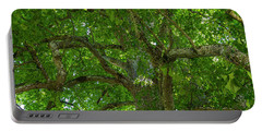 Old Linden Tree. Portable Battery Charger