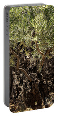 Portable Battery Charger featuring the photograph Olive Tree by Mae Wertz