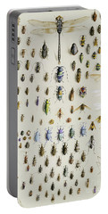 One Hundred And Fifty Insects, Dominated At The Top By A Large Dragonfly Portable Battery Charger