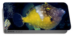 Portable Battery Charger featuring the photograph Orange Filefish by Jean Noren