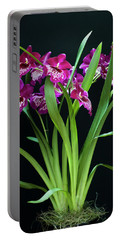 Orchids Miltonia Portable Battery Charger by Lana Enderle