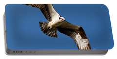 Portable Battery Charger featuring the photograph Osprey - Soaring by Sue Harper