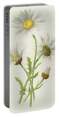 Ox Eye Daisy Portable Battery Charger by Frederick Edward Hulme