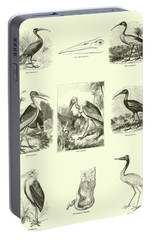 Page From The Pictorial Museum Of Animated Nature  Portable Battery Charger by English School