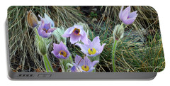 Portable Battery Charger featuring the photograph Pasqueflower by Michal Boubin