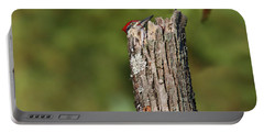 Peek A Boo Pileated Woodpecker Portable Battery Charger