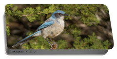 Perched Scrub Jay Portable Battery Charger