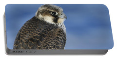 Peregrine Falcon Juvenile Close Up Portable Battery Charger