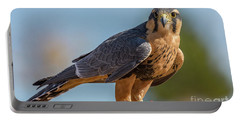 Peregrine Falcon Wildlife Art By Kaylyn Franks Portable Battery Charger