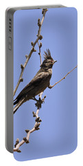 Phainopepla Portable Battery Charger
