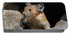 Pika Looking Out From Its Burrow Portable Battery Charger