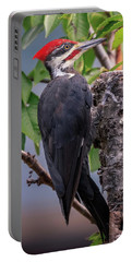 Pileated Woodpecker Portable Battery Charger