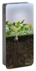 Pilewort Or Lesser Celandine Ranunculus Ficaria - Root System -  Portable Battery Charger