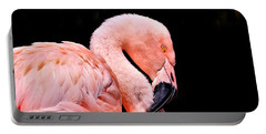 Portable Battery Charger featuring the photograph Pink Flamingo On Black by Sheila Brown