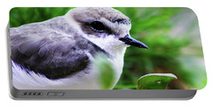Portable Battery Charger featuring the photograph Piping Plover by Anthony Jones
