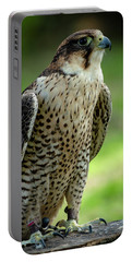 Portable Battery Charger featuring the photograph Portrait Bird  by Cliff Norton