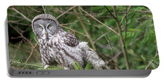 Portrait Of Gray Owl Portable Battery Charger by Greg Nyquist
