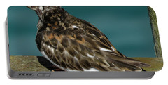 Preening Turnstone Portable Battery Charger