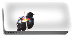 Puffed Up Red-winged Blackbird Portable Battery Charger