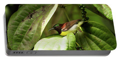 Purple-rumped Sunbird Portable Battery Charger
