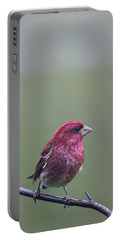 Portable Battery Charger featuring the photograph Rainy Day Finch by Susan Capuano
