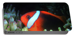 Red And Black Anemonefish, Great Barrier Reef Portable Battery Charger