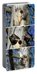 Red Bellied Woodpecker Harassed By A Starling Portable Battery Charger