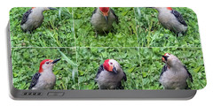 Red-bellied Woodpecker Posing In The Grass Portable Battery Charger
