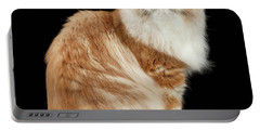 Red Big Adult Persian Cat Angry Sits And Turned Back On Black  Portable Battery Charger