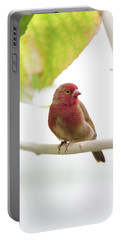 Portable Battery Charger featuring the photograph Red Bird by Raphael Lopez
