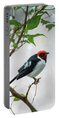 Red Capped Cardinal 2 Portable Battery Charger
