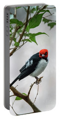 Red Capped Cardinal Portable Battery Charger