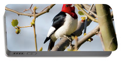 Portable Battery Charger featuring the photograph Red-headed Woodpecker At A Glace  by Ricky L Jones