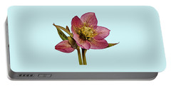 Red Hellebore Blue Background Portable Battery Charger