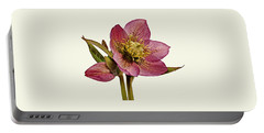 Red Hellebore Cream Background Portable Battery Charger