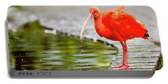 Portable Battery Charger featuring the photograph Red Ibis by Alexey Stiop